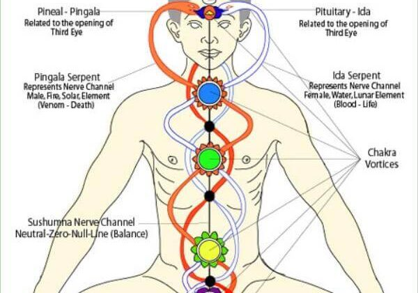 What are Nadis and Their Relationship to the Chakras (1)